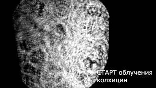 Колхицин(, 2015-08-23T18:49:35.000Z)