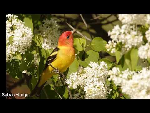 Wheeler National Wildlife Refuge. Decatur.Alabama  by Sabas vLogs