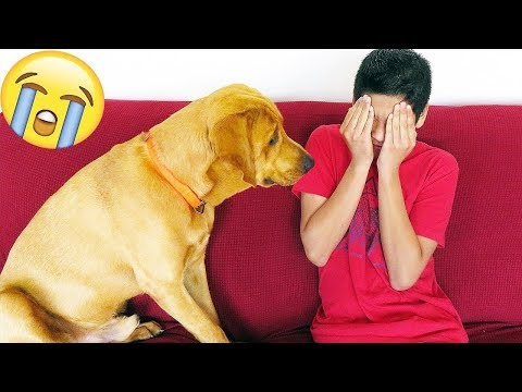 Funny Dog Reaction to me Crying! - PRANK (BEST REACTION EVER)