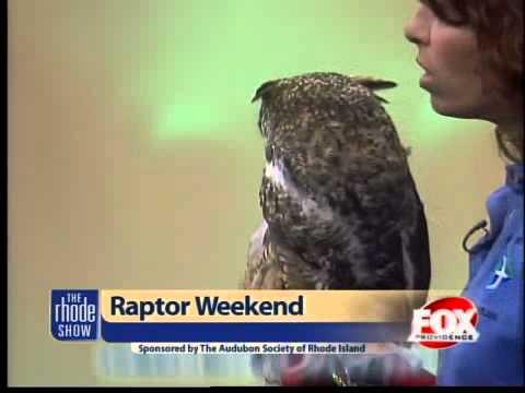 Raptor Weekend At Audubon Society Of RI