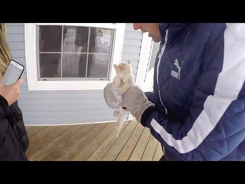 Trovano Un Gatto Congelato In Giardino Quello Che Accade è Un Vero