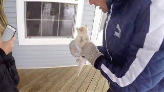 Trovano un gatto congelato in giardino. Quello che accade è un vero miracolo d'amore