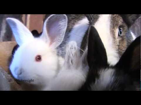 Rabbit Farming Changing Lives