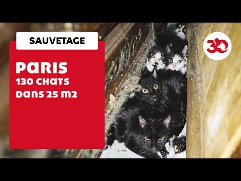 Urgence Pour 130 Chats Sauvés Dans Un Studio Parisien Par La Fondation 30 Millions D'Amis