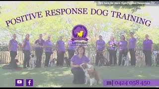 How to Train Your Dog using Positive Reinforcement (Positive Response Dog Training)