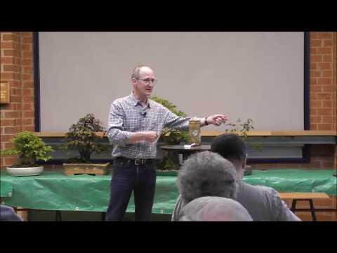 How To Style Deciduous Broad Leaf Bonsai Trees -  Stephen Cullum Bonsai Northwest Melbourne