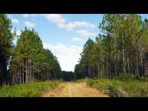 Oak Creek Rural Land for Sale in Bradford County, Florida