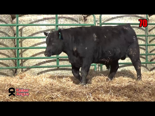 Kaiser Angus Ranch Lot 70