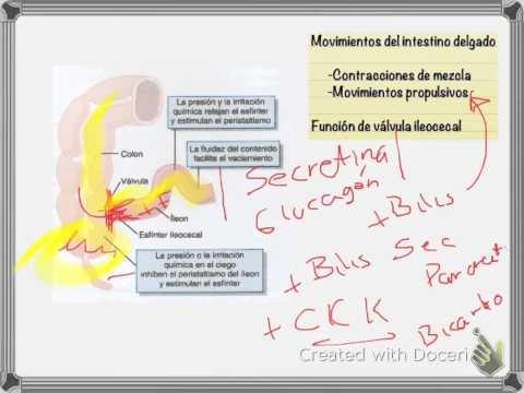 Anatomía y Fisiología l Aparato Gastrointestinal