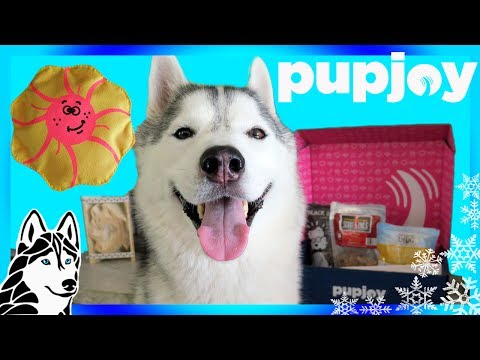 Download Youtube: HUSKY WANTS ALL THE TREATS | PUPJOY UNBOXING