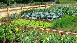 видео Красивый сад своими руками: что нужно для создания собственного сада