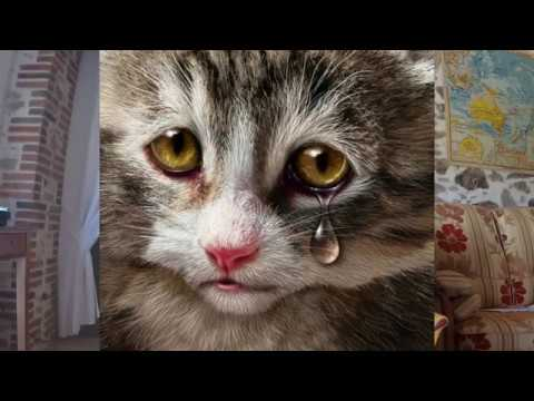 Le petit chat triste berceuse youtube - Image de petit chat ...