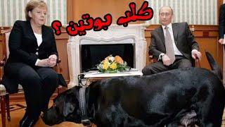 تعرف على كلب بوتين الذي اخاف ميركل