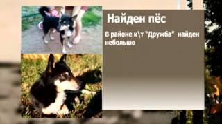 Найдена собака 18.07.13 Вятка Today