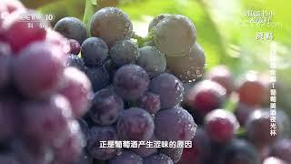 [跟着书本去旅行]古法酿造葡萄酒的秘籍| 课本中国