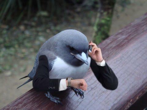 'BRAZEN Birds' -