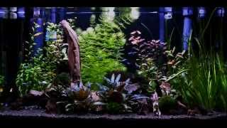 Automated Low Maintenance Aquarium - Setup & Solutions Step By Step