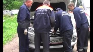 В Ярославле кошка застряла под капотом автомобиля