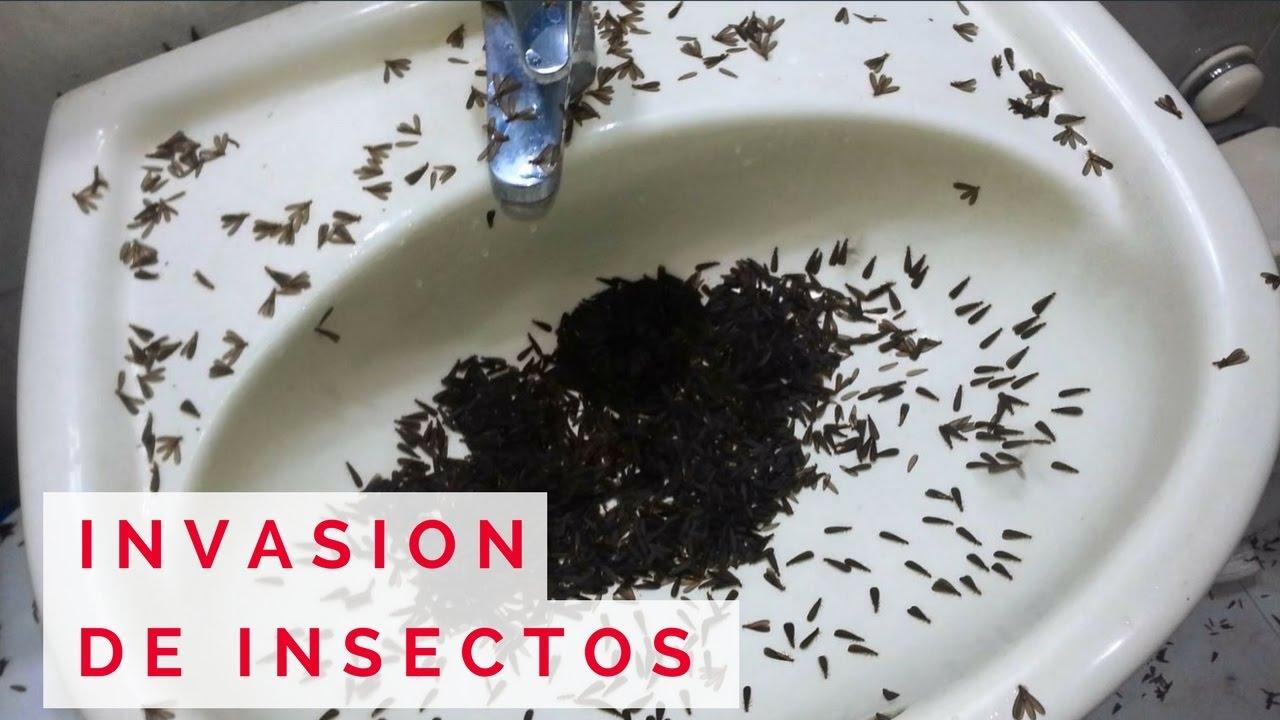 Increíble invasión de hormigas voladoras! Ver para creer! - YouTube