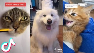 12 Minutes Straight of the Cutest Pets on Tik Tok 🥰