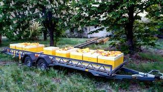Мой опыт использования пчелоплатформ от компании \БДЖОЛОВІЗ\