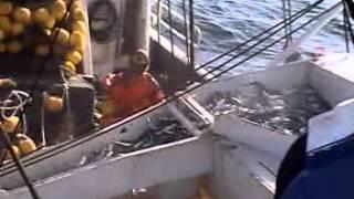 Faena de pesca Jurel y Caballa E/P BAMAR II - Parte III