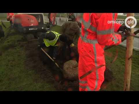 Eerste scheve boompjes verschijnen bij rondweg Zutphen