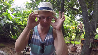 Tropical Farms Macadamia Nut Farm in Hawaii, on the island of Oahu