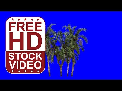 free HD video date palms with wind effect on blue screen 3D animation