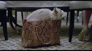 Siete vidas este gato es un peligro pelicula completa en español