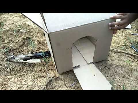 Best brid trop technology ! How To make brid trop.