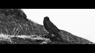 Rhiannon Giddens - Calling Me Home (with Francesco Turrisi)