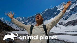 Alucinante avistamiento de Yaks en el Himalaya   Wild Frank en India   Animal Planet