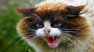 Коты бывают разные)