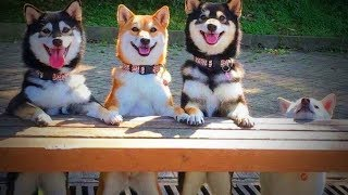 Weird Dogs 😂🐕 Funny Huskies 2017 - 2018 (Part 1) [Funny Pets]