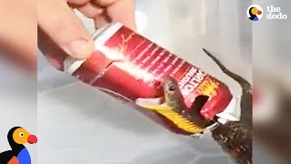 Man Rescues Deadly Snake From Can | The Dodo