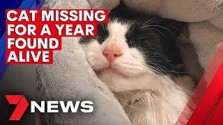 Missing Adelaide cat turns up a year later | 7NEWS