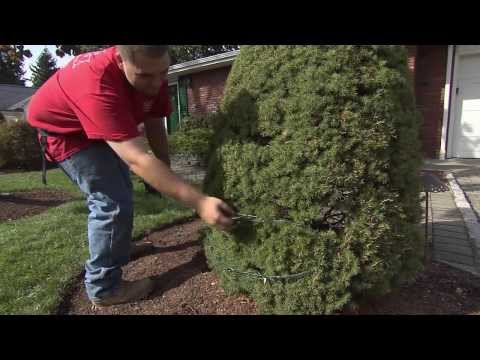 """HouseSmarts """"Outdoor Holiday Decorating"""" Episode 128"""