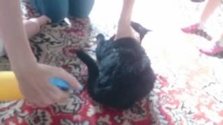 Мега ржачь. Кошка хочет кота :-)