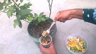 Update - How to use organic fertilizer for any plants | Best fertilizer for plants