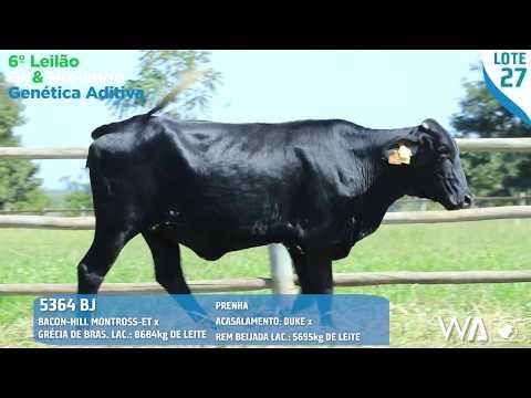 LOTE 27 - 5364 BJ - 6º Leilão Gir & Girolando Genética Aditiva