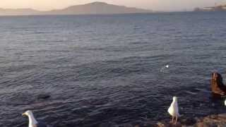 waves wind gulls