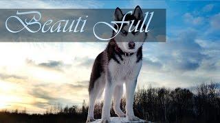 Собаки | Обои для рабочего стола