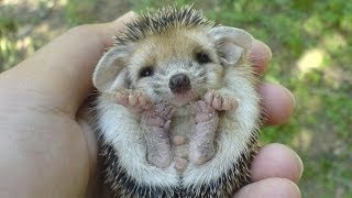 Top 10 Cutest Animals - 2015