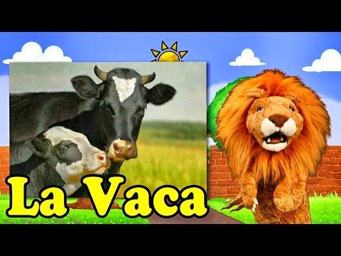 Canciones Infantiles del Zoo - El León Lorenzoo nos presenta a La Vaca - Videos Educativos #