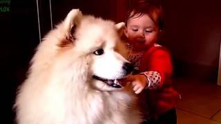 Домашние животные и дети. Видеоприколы