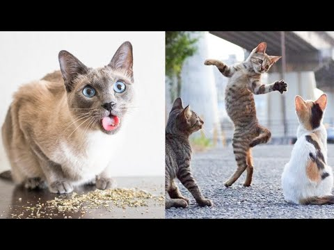 Try Not To Laugh or Grin While Watching Funny Animals Compilation #50