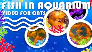 ENTERTAINMENT VIDEO FOR CATS. Fish in Aquarium for Cats to Watch.