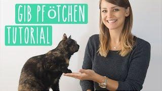 Katze Pfötchen geben beibringen   Clickertraining Trick Tutorial