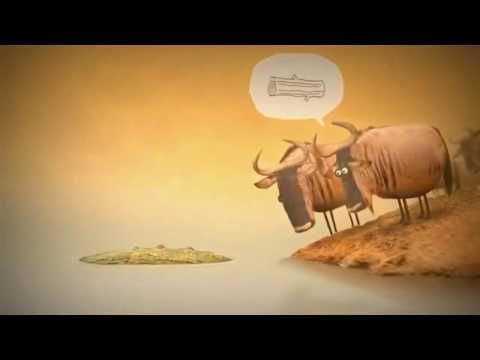 Amazing Short Videos